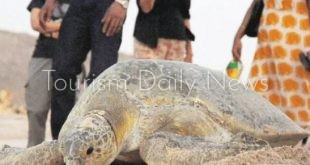 سلاحف رأس الجنز تقود سلطنة عمان للتربع على عرش السياحة البيئية