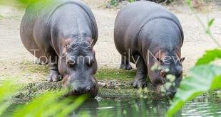 حديقة الإمارات للحيوانات توقع اتفاقية مع رابطة حدائق حيوان جنوب شرق آسيا