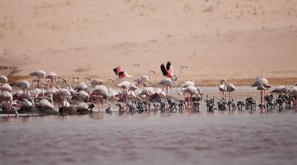 أبوظبي ترشيح محمية الوثبة لجائزة السياحة المسئولة في الشرق الأوسط