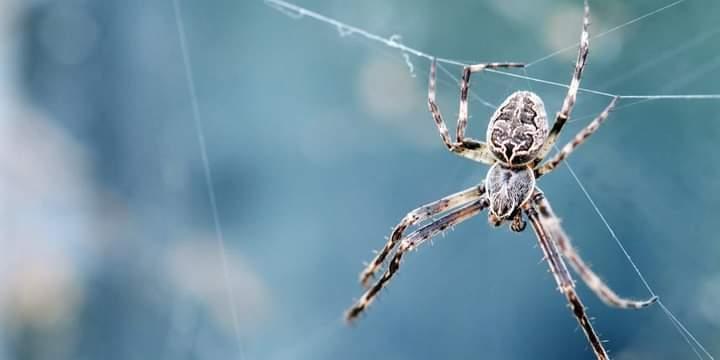 تطبيق إلكترونى جديد للتأمين من الثعابين والعناكب الخطيرة
