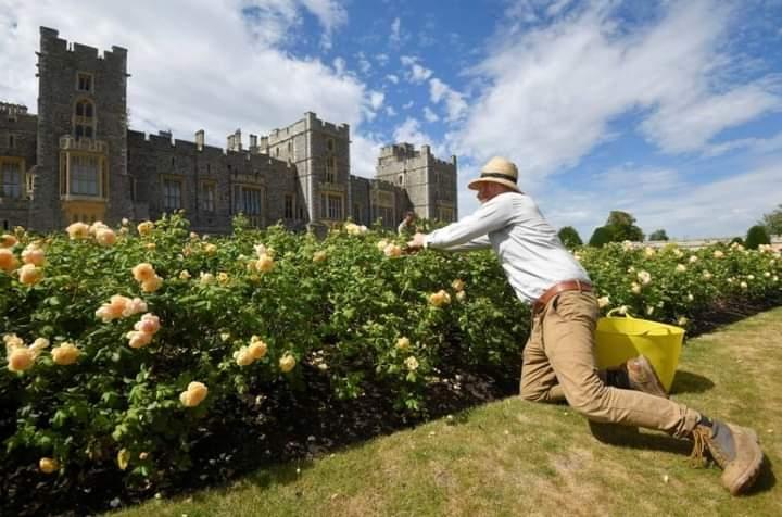قلعة وندسور تستقبل العامة في الحديقة الشرقية .. للمرة الأولى منذ 40 عاماً