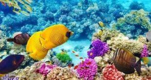 إطلاق الحملة الأولى لترويج السياحة البيئية في مصر غدًا .. بمحمية رأس محمد