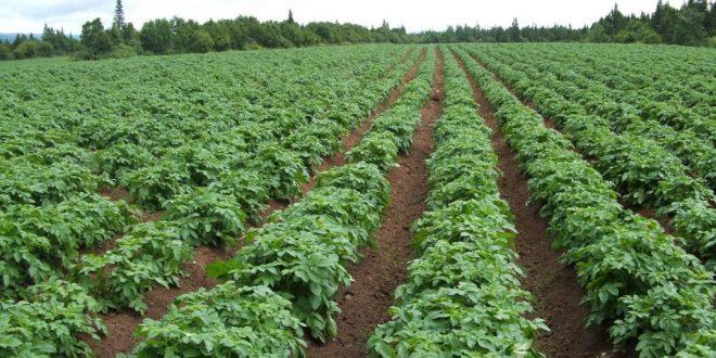 وزارة الزراعة تحذر من الأمطار المتوقعة وتأثيراتها على المحاصيل الشتوية