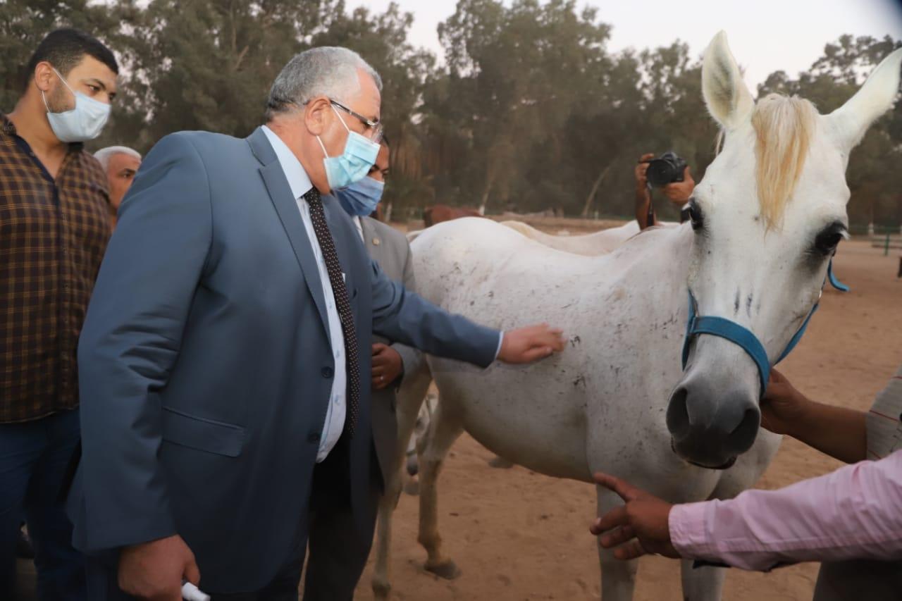 وزير الزراعة يتفقد أعمال تطوير ورفع كفاءة محطة الزهراء للخيول العربية2