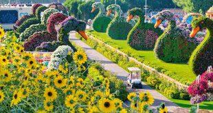 أكبر حديقة للزهور الطبيعية في العالم تفتح أبوابها أمام الزوار أول نوفمبر