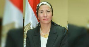 العثور علي دولفين نافق بالبحر الاحمر .. ووزيرة البيئة : أنثى وتم دفنها