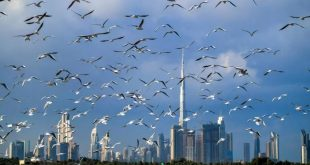 الإمارات تمنح الجنسية للمستثمرين العلماء والأطباء وعائلاتهم لاستقطاب العقول