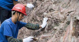 اكتشاف أحافير نادرة لديناصورات فى شرق الصين يعود تاريخها إلى 70 مليون عام