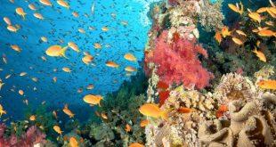 خطة البيئة لطرح المحميات الطبيعية أمام القطاع الخاص .. والقاهرة البداية