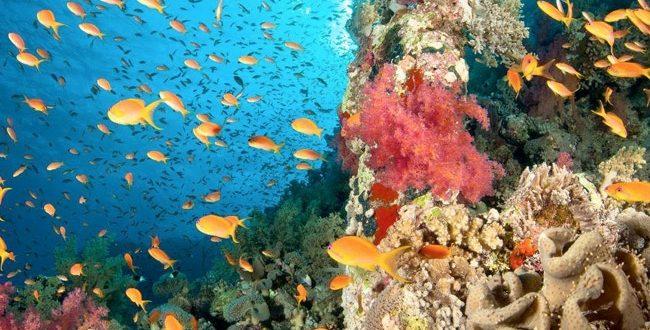 وزيرة البيئة : الانتهاء من رقمنة المحميات الطبيعية والزائر لايحتاج لتذكرة