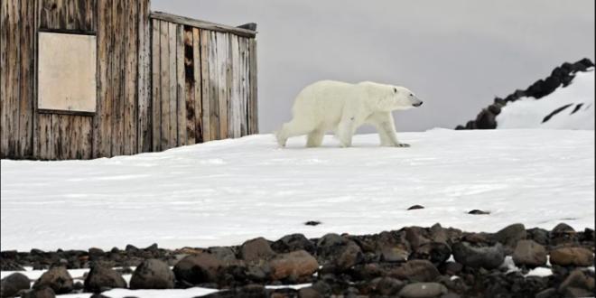 فندق في الصين يمنح نزلائه العيش مع الدببة القطبية