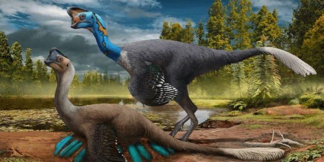 التوصل لحفرية ديناصور حاضن لمجموعة من البيض تنتمي لعائلة الأوفيرابتوريات
