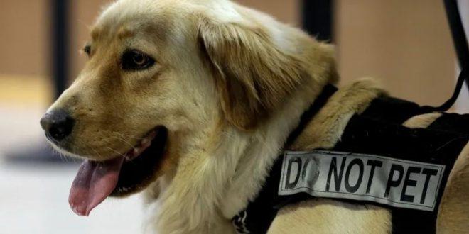 لوائح السفر الجديدة تفرض على شركات الطيران التسابق لشراء الكلاب البوليسية