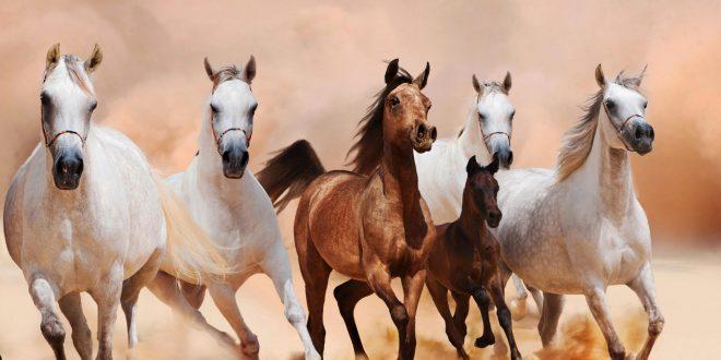 الفقي وحواس وسفراء أوربيين يشاركون في التجمع الأول لمحبي الخيول العربية