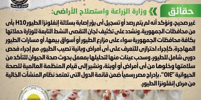 ظهور بؤر جديدة من فيروس إنفلونزا الطيور H10 في مصر شائعة