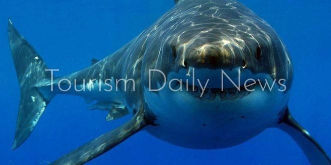 أسماك القرش بسواحل مدينة شرم الشيخ