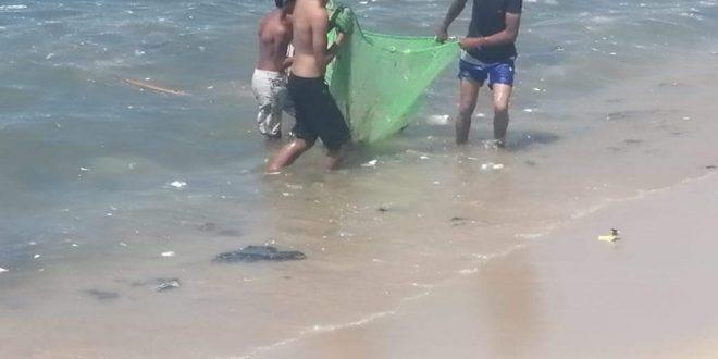 سياحة ومصايف الإسكندرية تواصل حملة تنظيف ورفع كفاءة عدد من الشواطئ