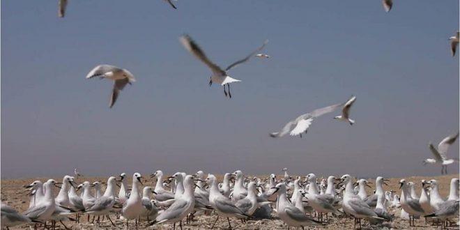 البيئة تعلن بدء موسم رصد وتسجيل الطيور المهاجرة من أوروبا خلال موسم الخريف