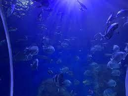 تريب ادفايزر تختار متحف الأحياء المائية ضمن أفضل 10أماكن جذب فى العالم