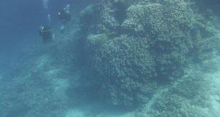 شركة البحر الأحمر للتطوير تعلن اكتشاف مستعمرة مرجانية ضخمة بجزيرة الوقادي