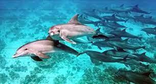 الدلافين تشعل التجارب السياحية في الغردقة وتنعش المقاصد البحرية