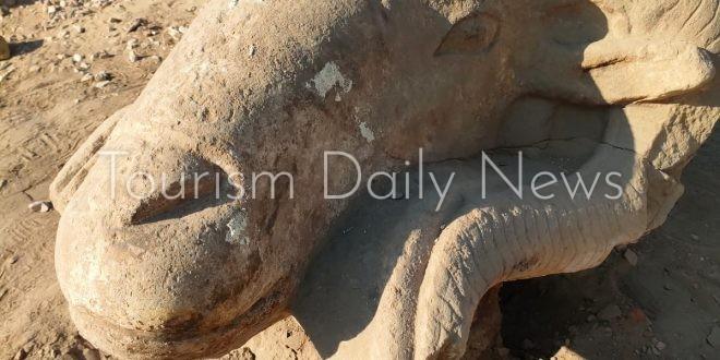 بدء أعمال ترميم روؤس الكباش المكتشفة بطريق المواكب الملكية